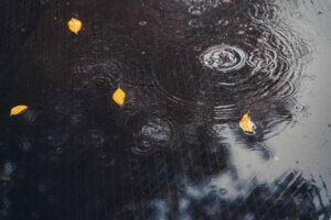 Picture of raindrops falling onto a puddle of water with leaves floating on it.